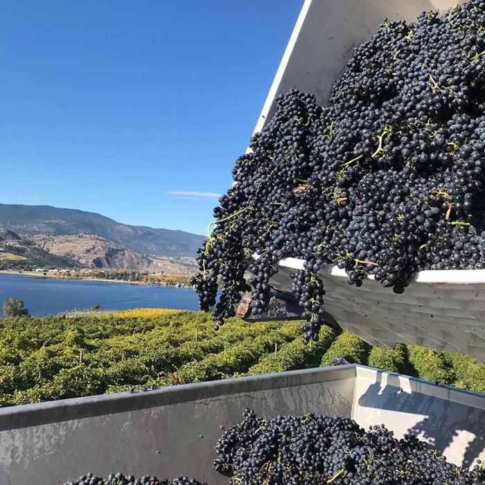 Pentage is one of the best Okanagan wineries