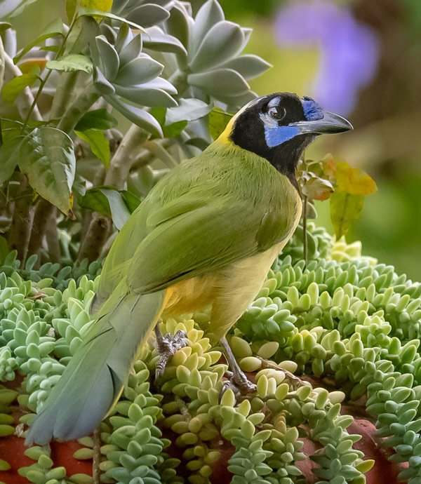 See colorful birds and hike forest trails at Vallarta Botanical Gardens, one of the most beautiful gardens in Mexico.