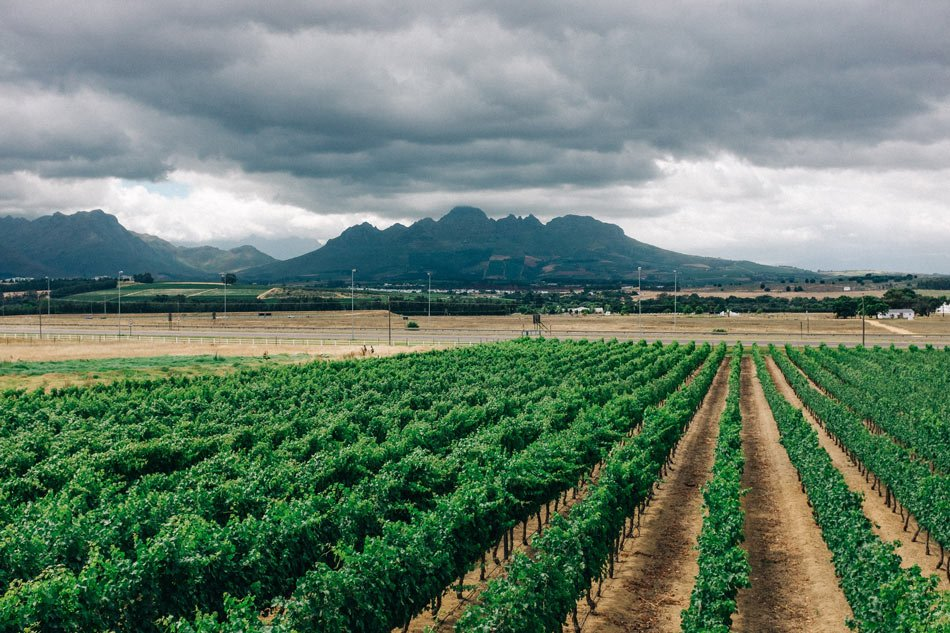 Visiting Stellenbosch is a great day trip from Cape Town.