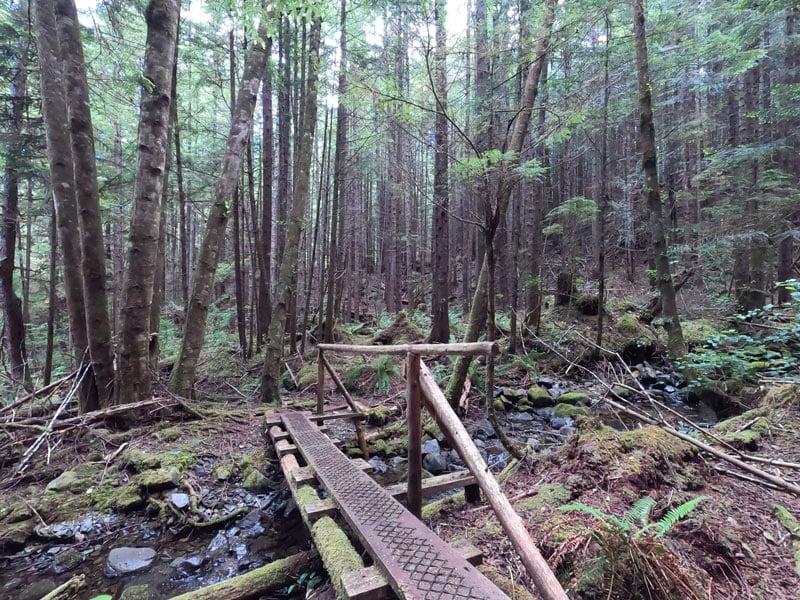 Blinkhorn Trail at Telegraph Cove