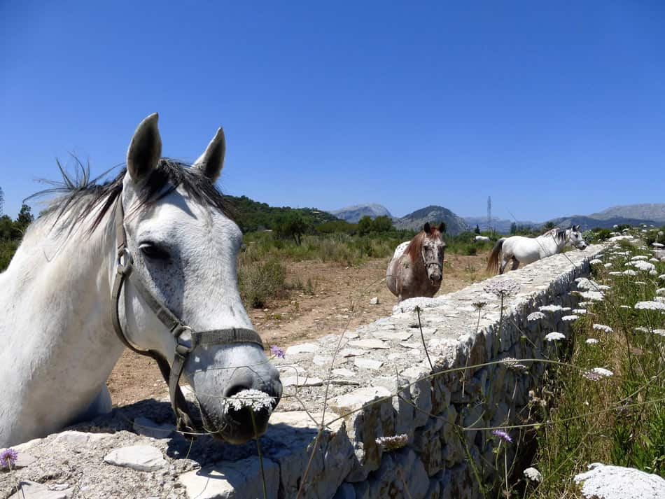 Horse riding in Mallorca is another activity visitors can enjoy