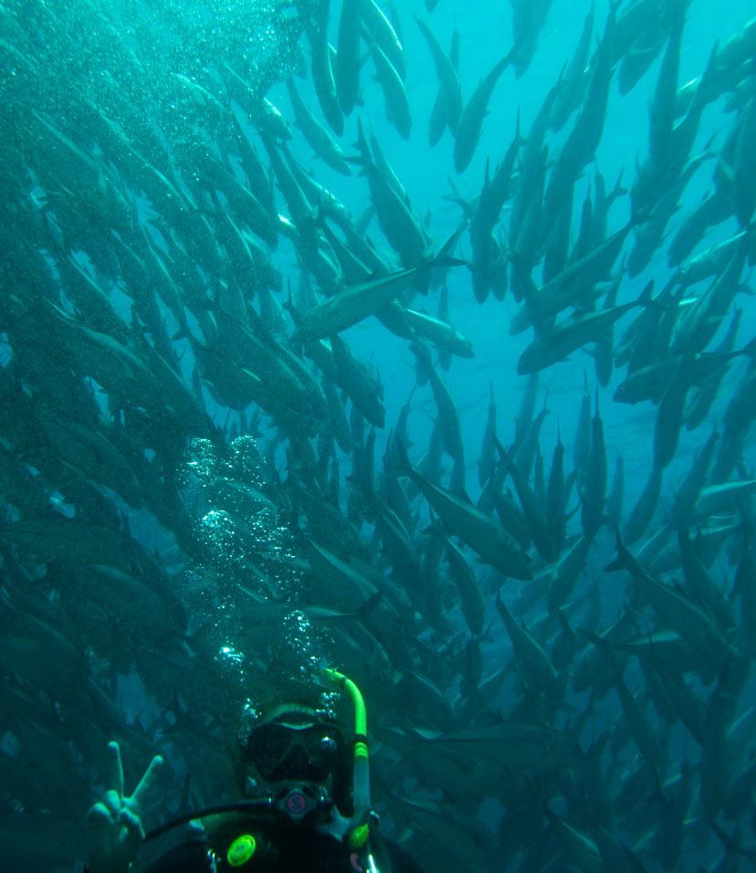 Scuba diving Cabo Pulmo, Mexico