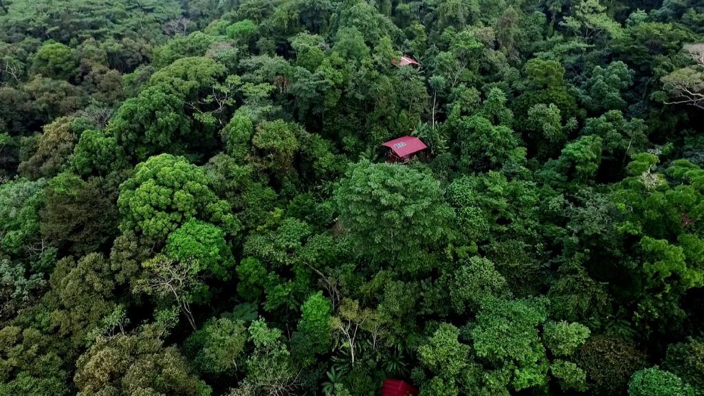 La Loma Jungle Lodge is one of the top places to stay in Bocas del Toro