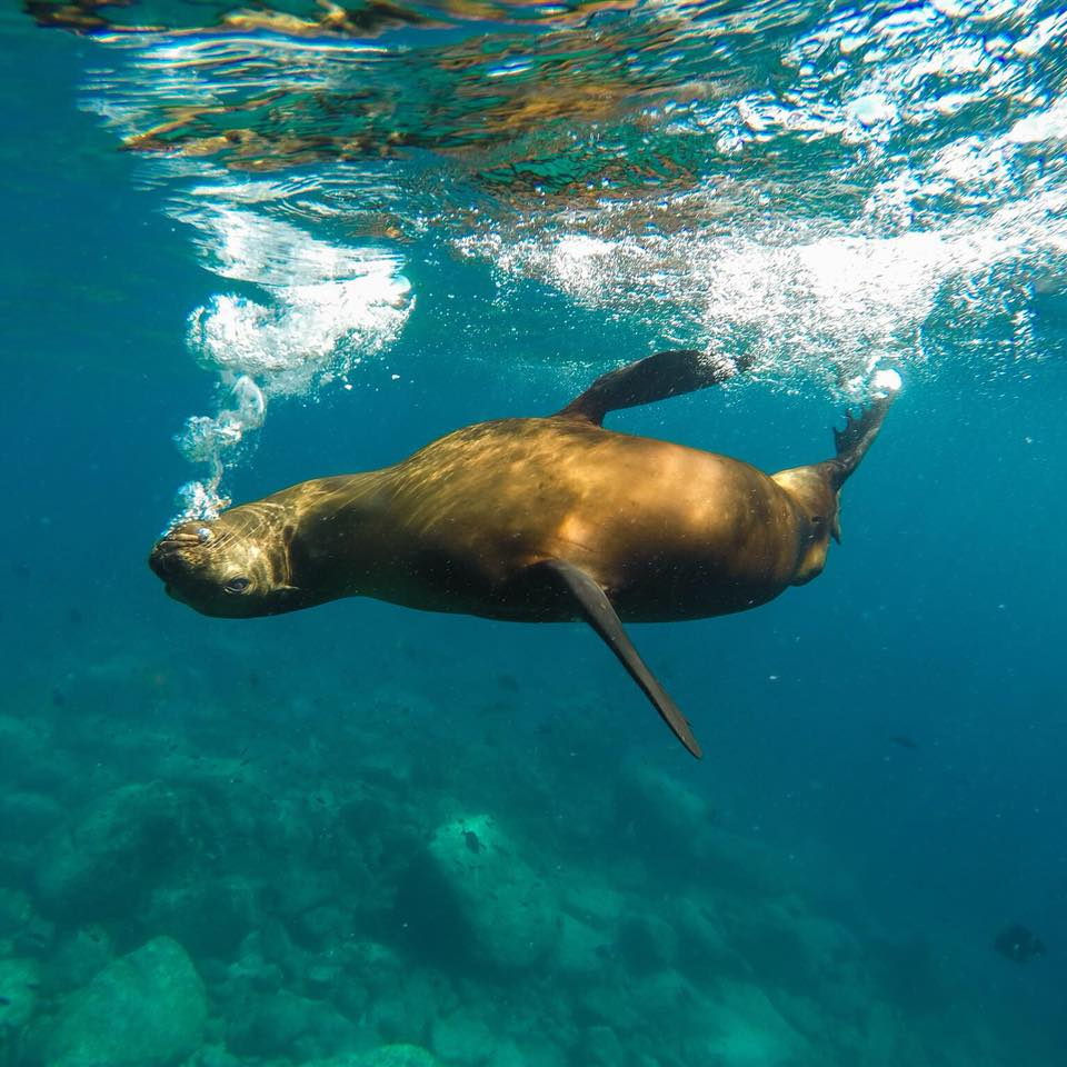 It's fun to snorkel with sea lions at Cabo Pulmo!