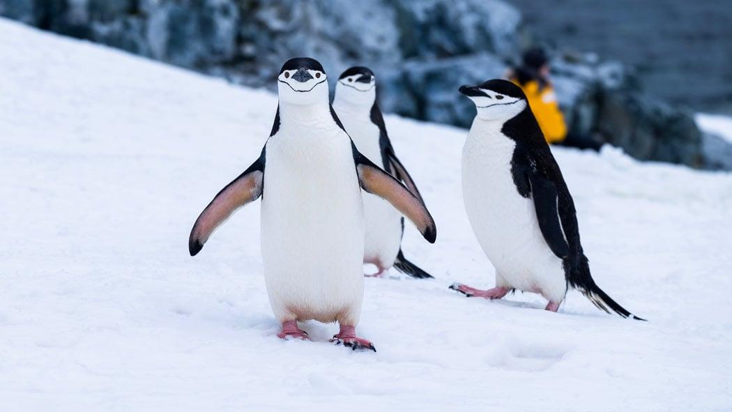 Antarctica travel information