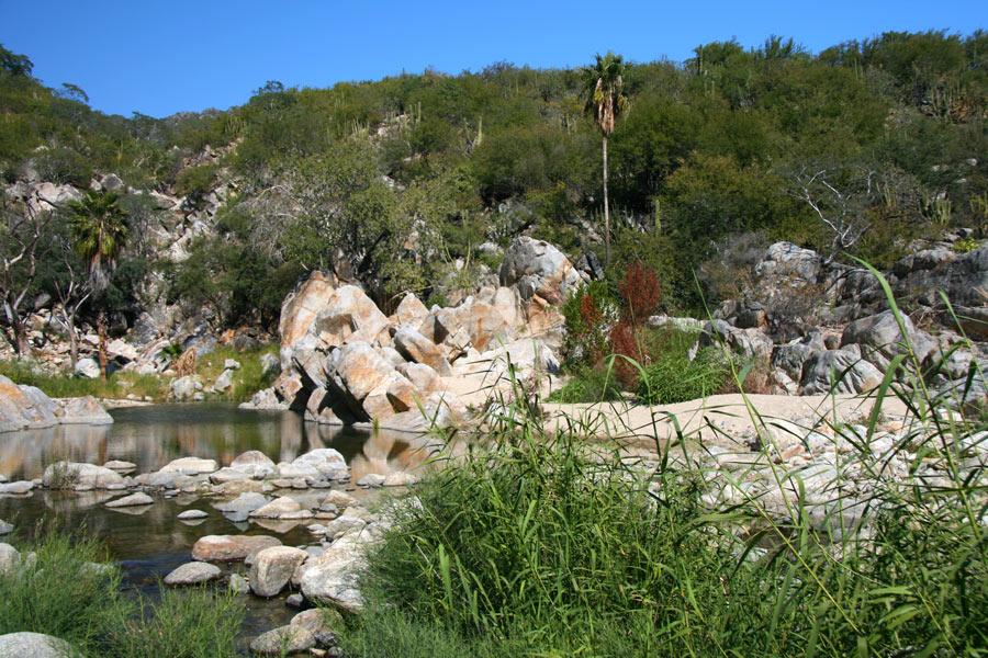 Santa Rita Hot Springs in the Sierra de La Laguna biosphere reserve