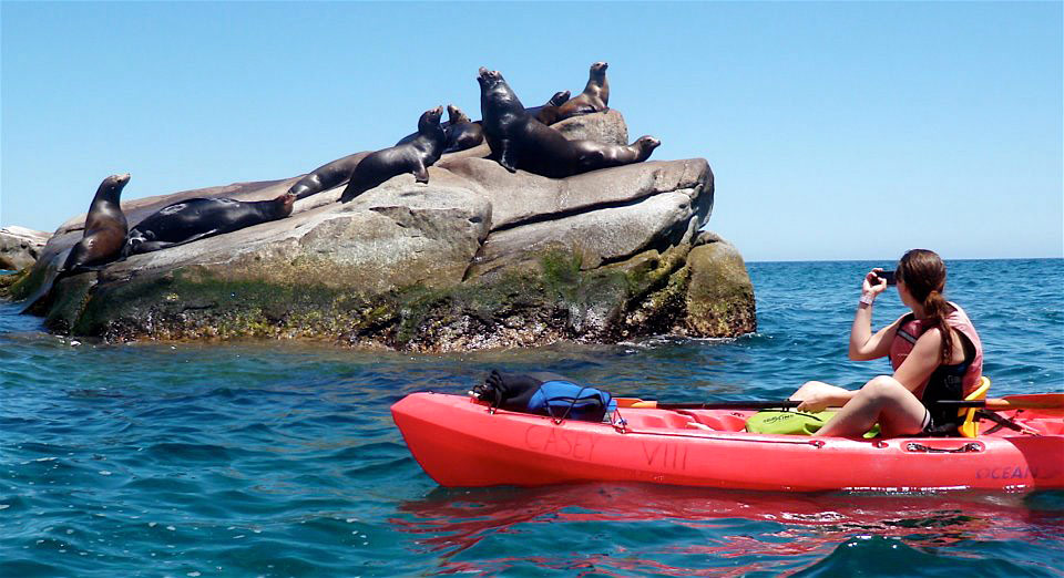 Kayaking with sea lions at Cabo Pulmo