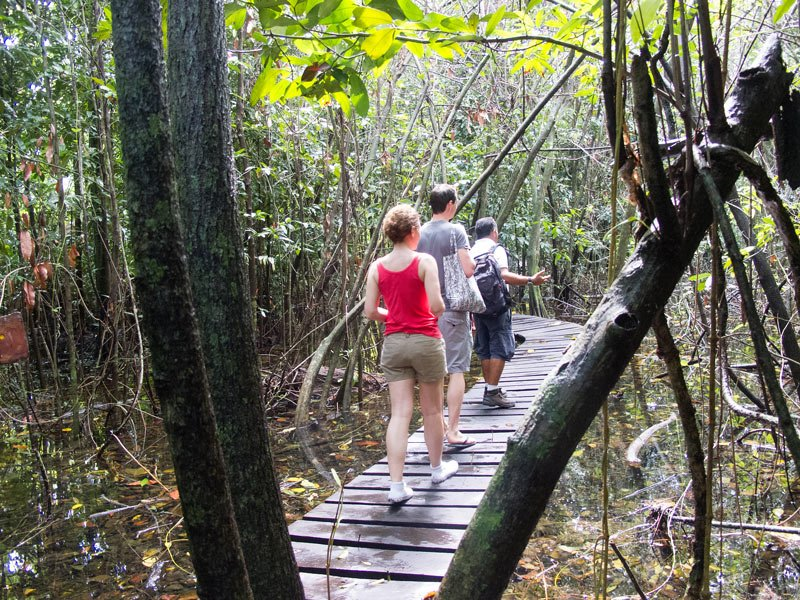Walking in the tropical rainforest on our Sian Ka'an tour
