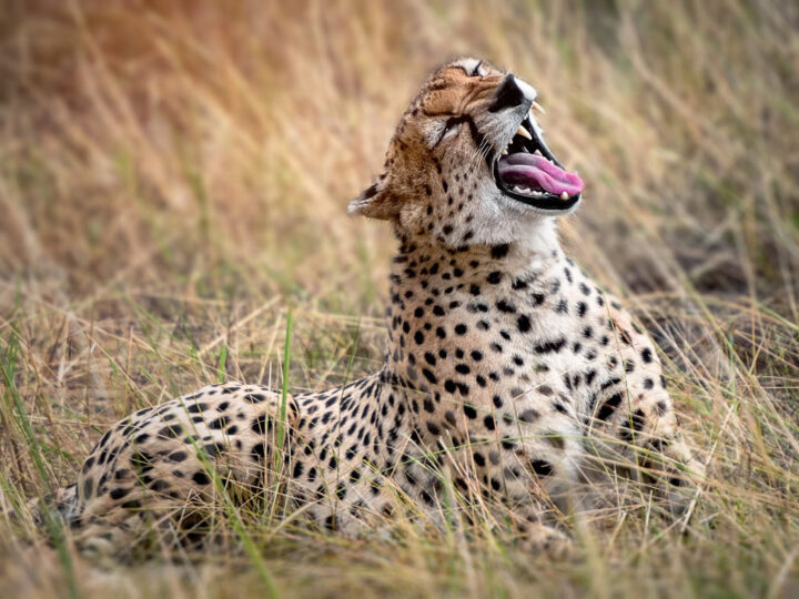 Luxury Africa travel guide and safari planner