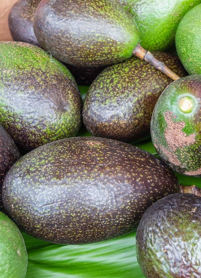 Avocados in Hawaii