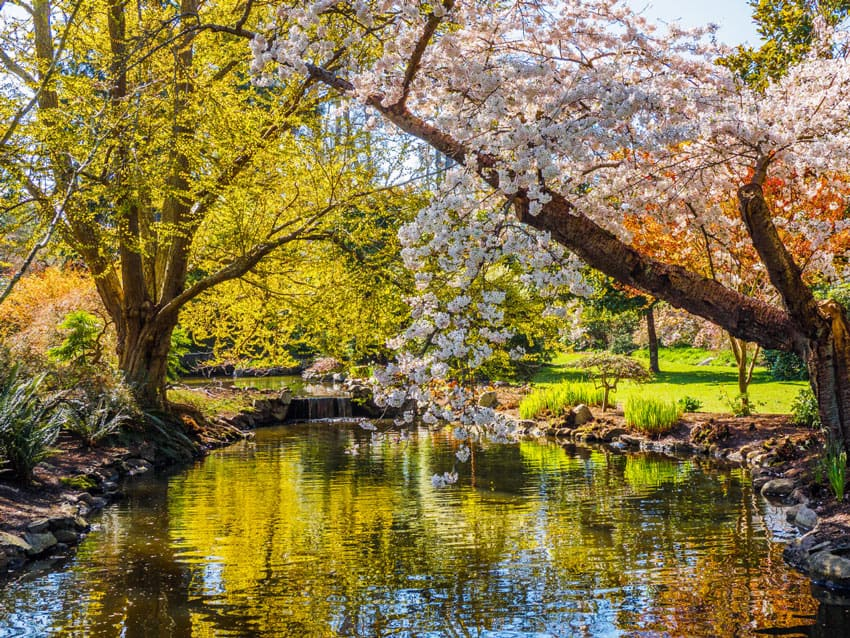 One of the best places to walk in Victoria, BC, is Beacon Hill Park