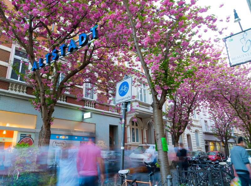 Bonn is particularly pretty when the cherry blossoms bloom in spring