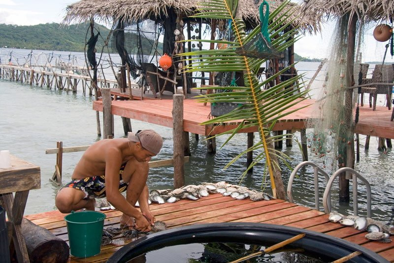 Cleaning oysters at a black pearl farm in Tahiti