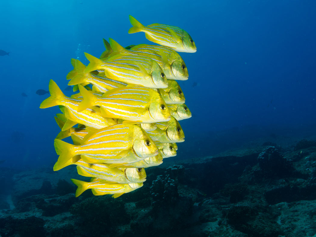 A living coral reef, Cabo Pulmo is a national marine park.