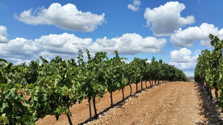La Rioja vineyards