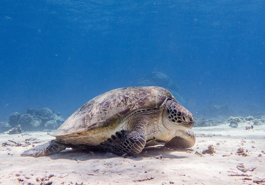 Snorkeling with sea turtles in the Gili Islands