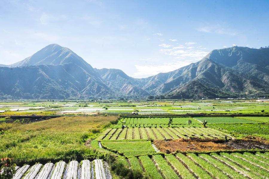 Tetebatu Rice Terraces in Lombok