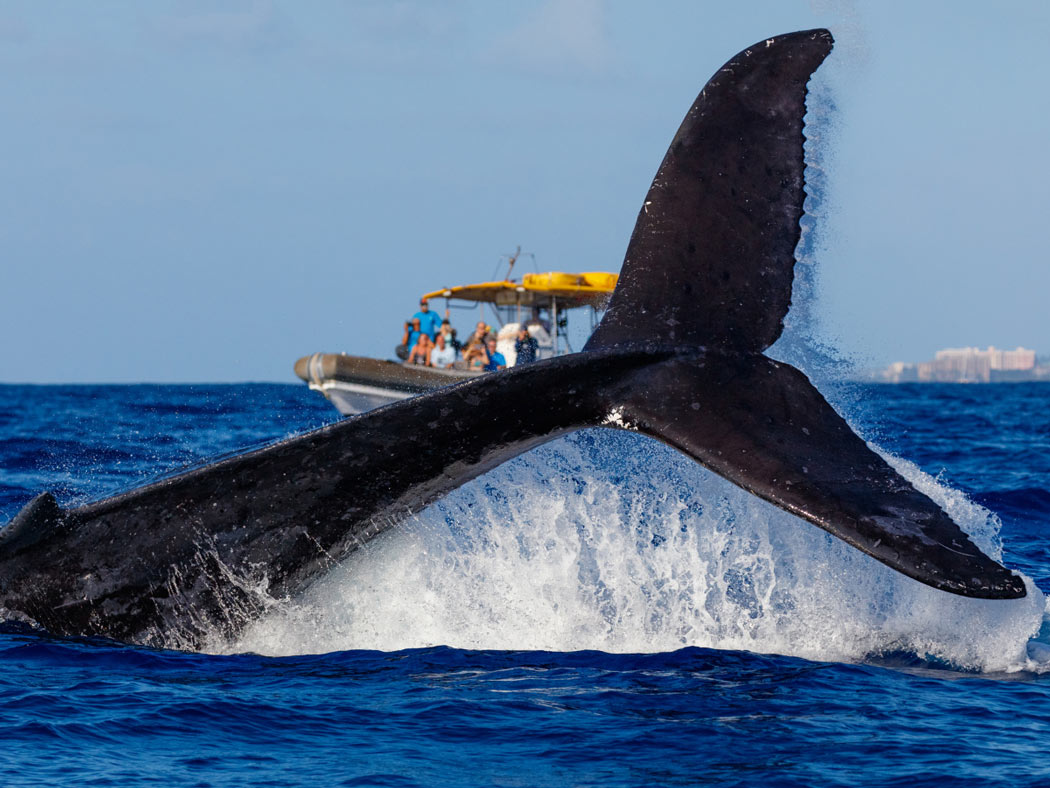 Bottoms up! Whale watching is popular on Maui