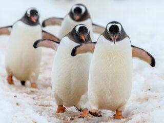 Types of Penguins in Antarctica