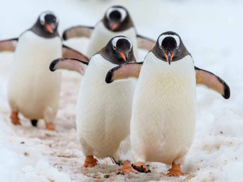 Chilling with 7 playful types of penguins in Antarctica