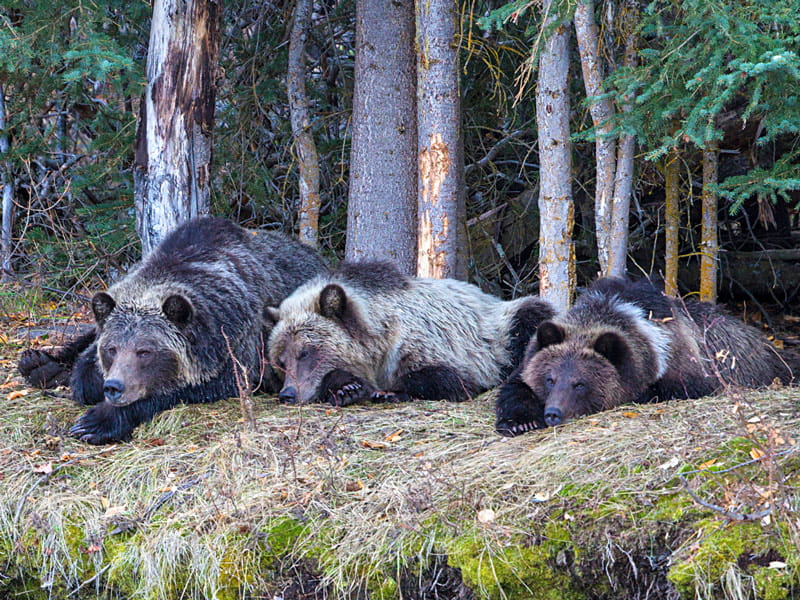 Bear viewing at Chilko Lake