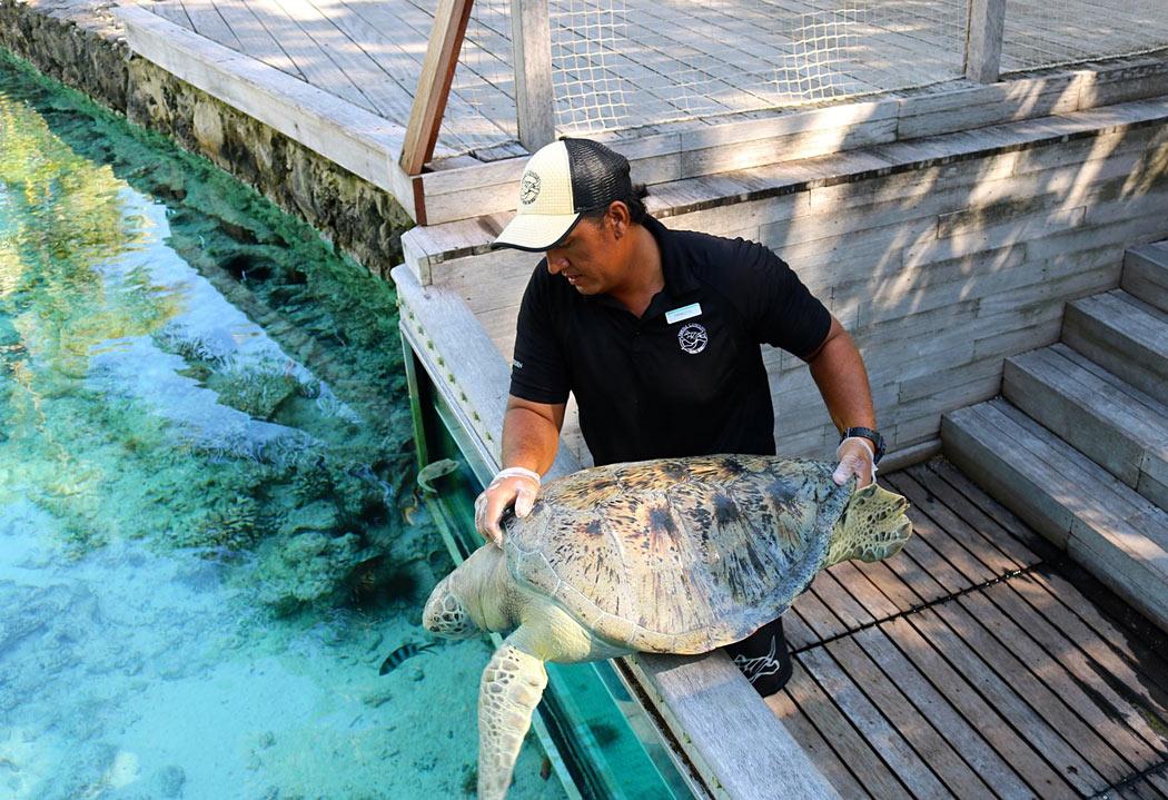 Bora Bora Sea Turtle Sanctuary