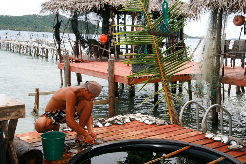 Cleaning pearl oysters in Tahiti
