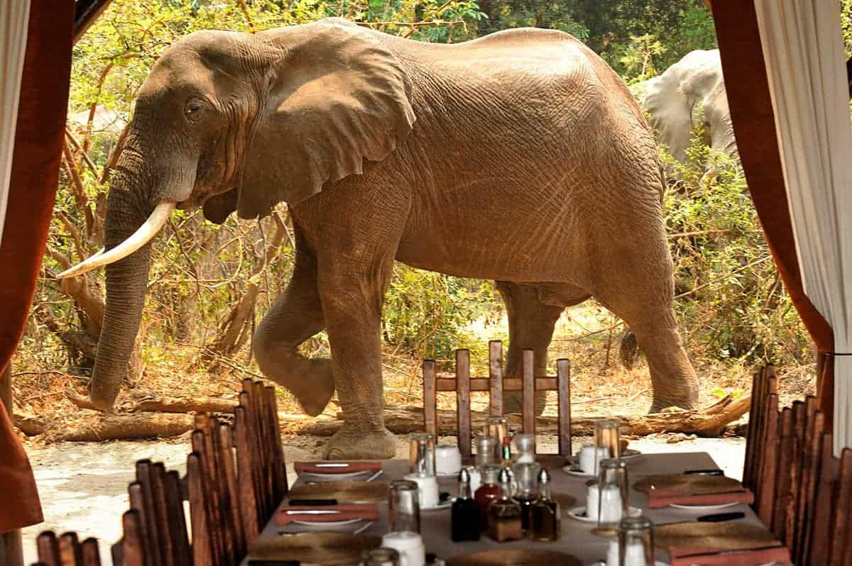 Chiawa is one of the best safari camps in Africa