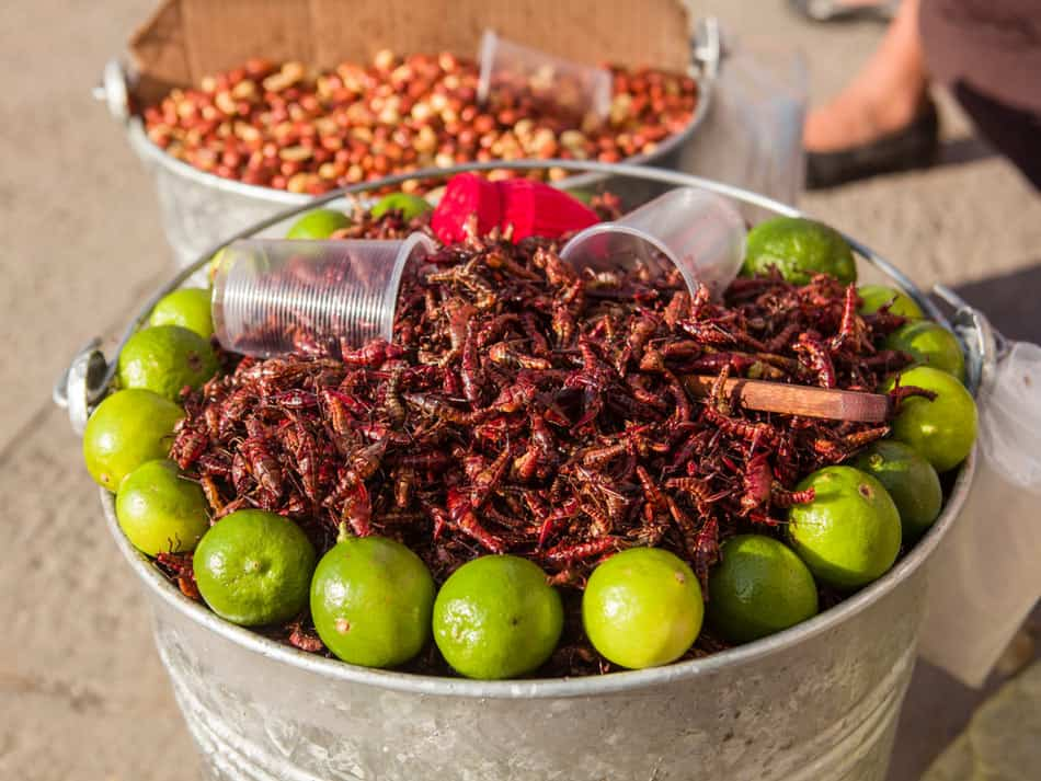 Fried grasshoppers for sale in Mexico