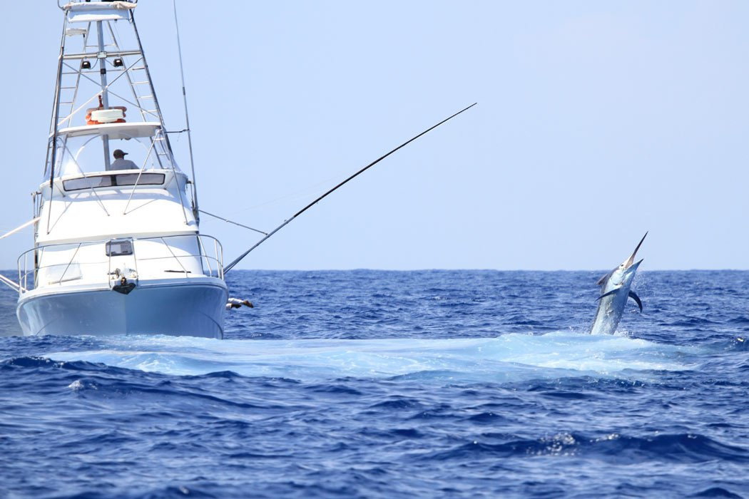 Starting in August, the marlin fishing in Cabo is awesome