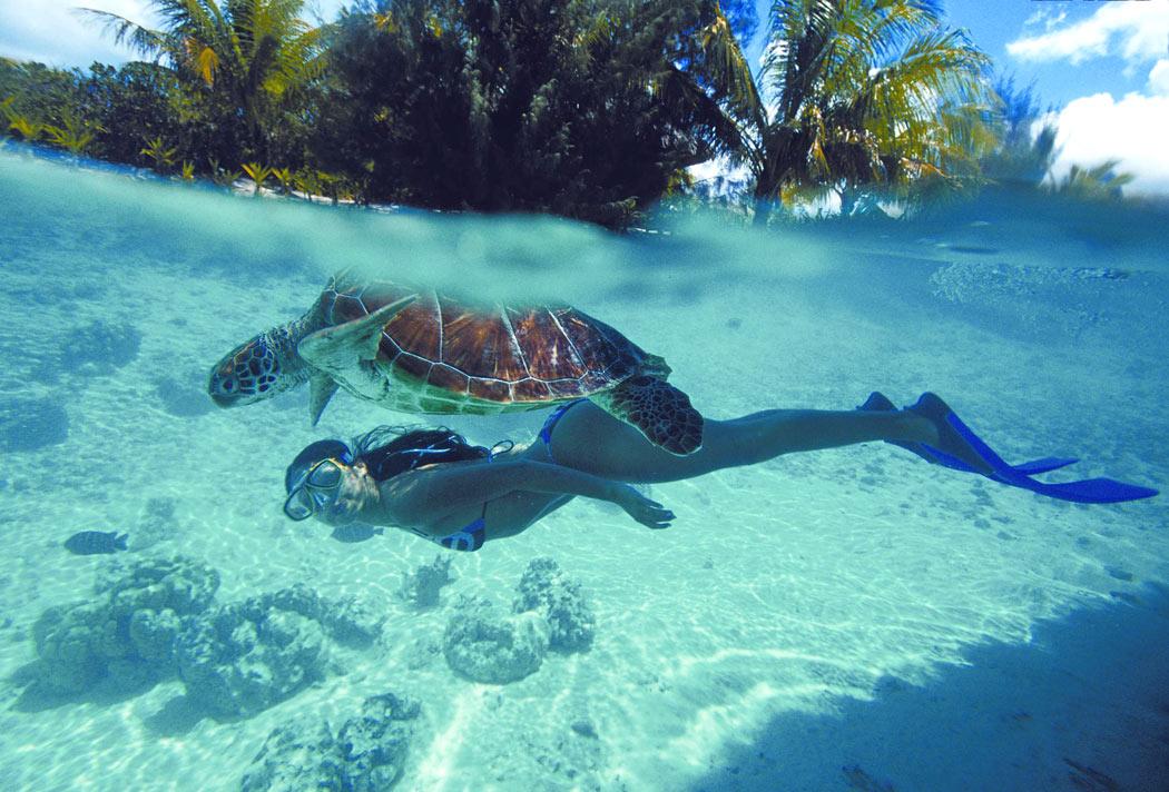 Snorkeling with sea turtles in Bora Bora