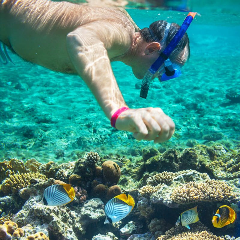 The snorkeling in Los Cabos in summer is great!