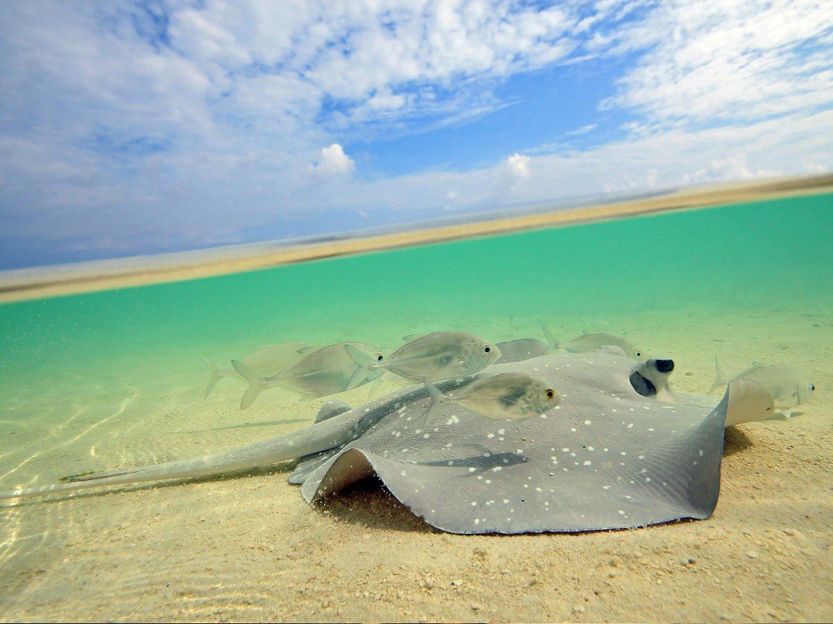 Feeding the stingrays is fun in Bora Bora
