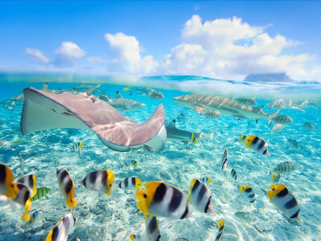 Stingrays and sharks in Bora Bora