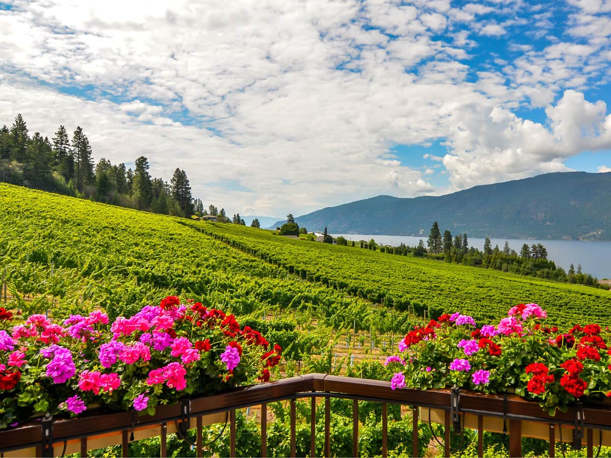 The Okanagan wineries produce some lovely wines!