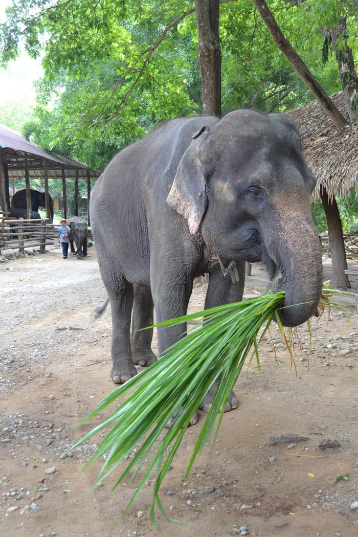 An ethical Thailand sanctuary