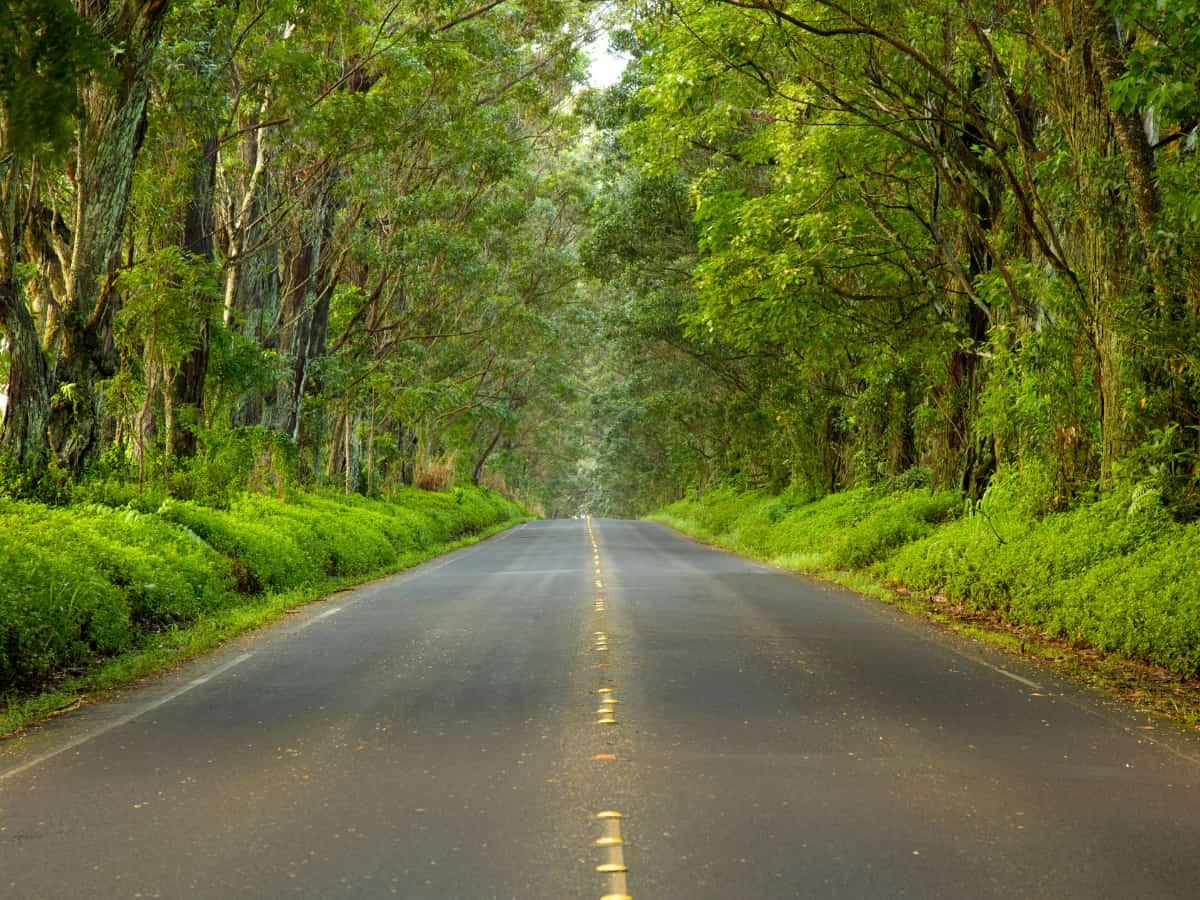 The famous Kauai Tree Tunnel