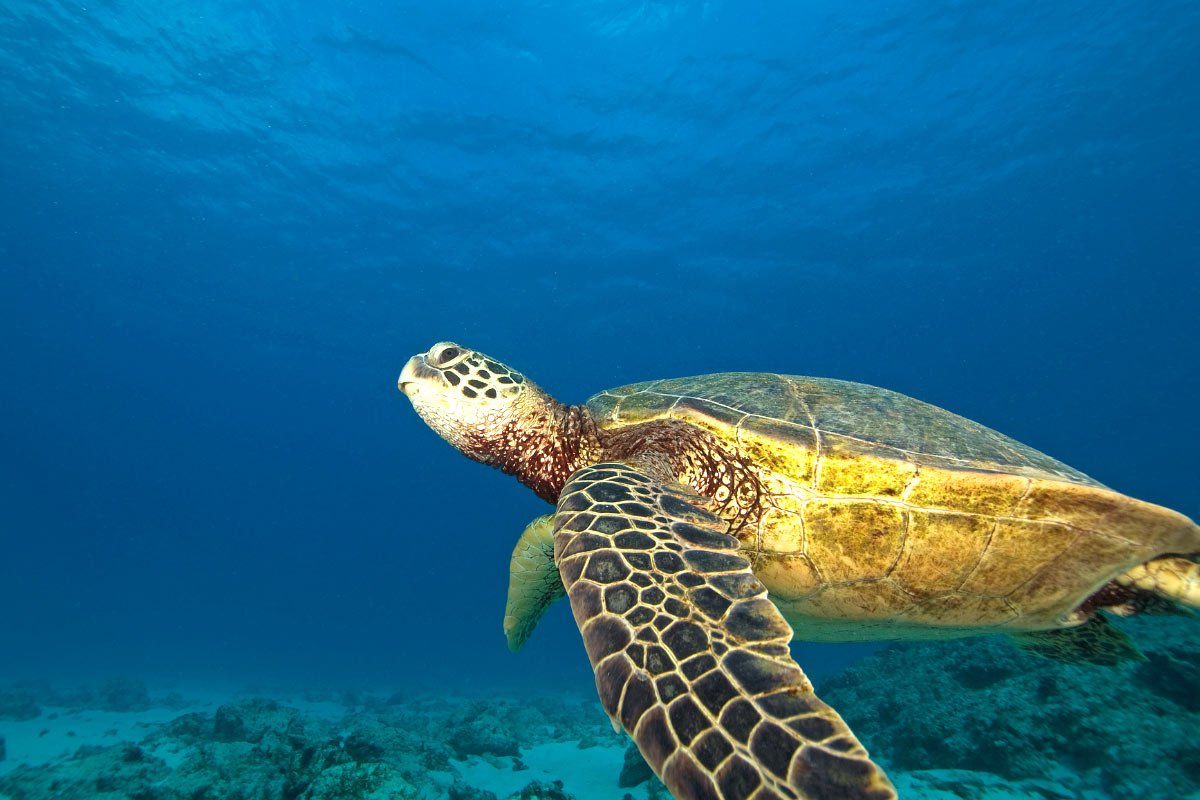 You might spy sea turtles at Ke'e Beach, Kauai.