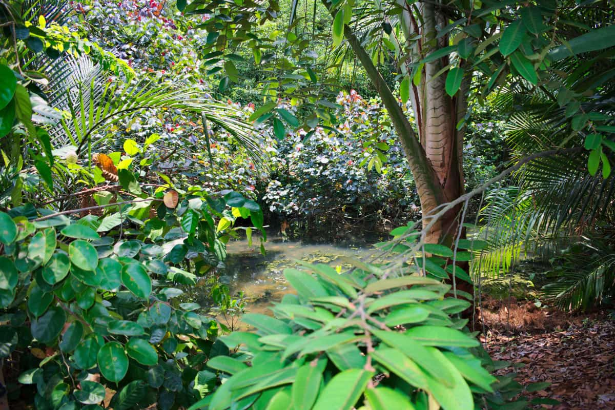 The Singapore Botanic Gardens are over 160 years old.