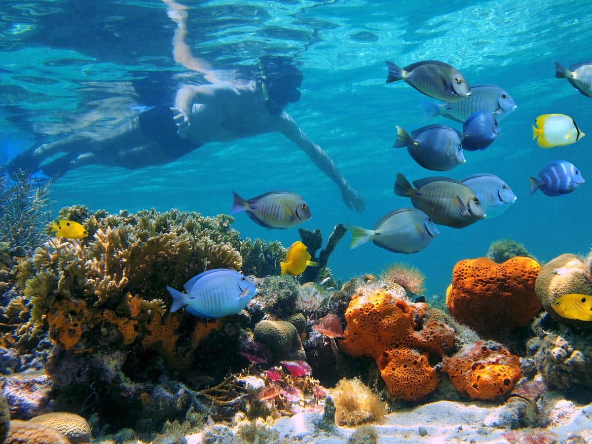 There's awesome snorkeling in Bocas del Toro at Punta Caracol Aqua Lodge