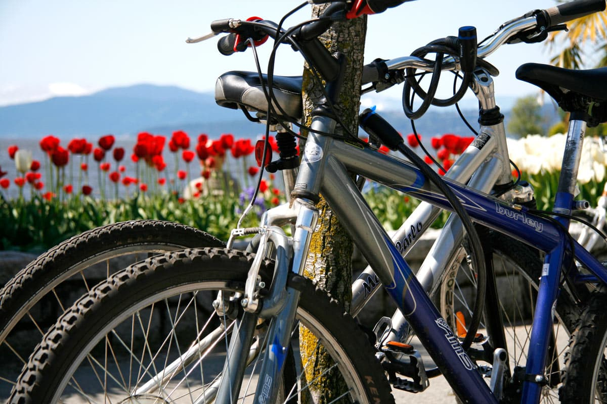 Renting bicyles in Stanley Park is easy. You can choose from several rental places.