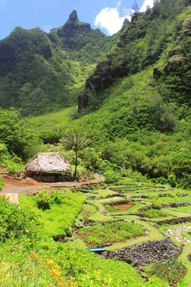 The Limahuli Garden and Preserve pays homage to native Hawaiian plants and Hawaiian culture.