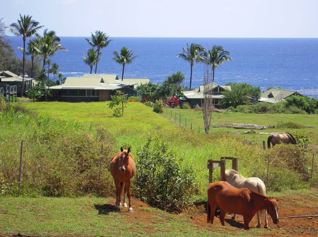 The Hana-Maui Resort's pastoral setting feels a world away from the glam beach resorts on the other side of Maui.