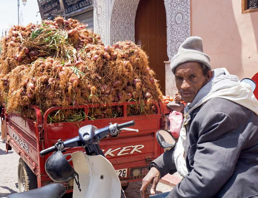 A common sight in Morocco: Push-carts, motor scooters and other contraptions carrying farm produce.