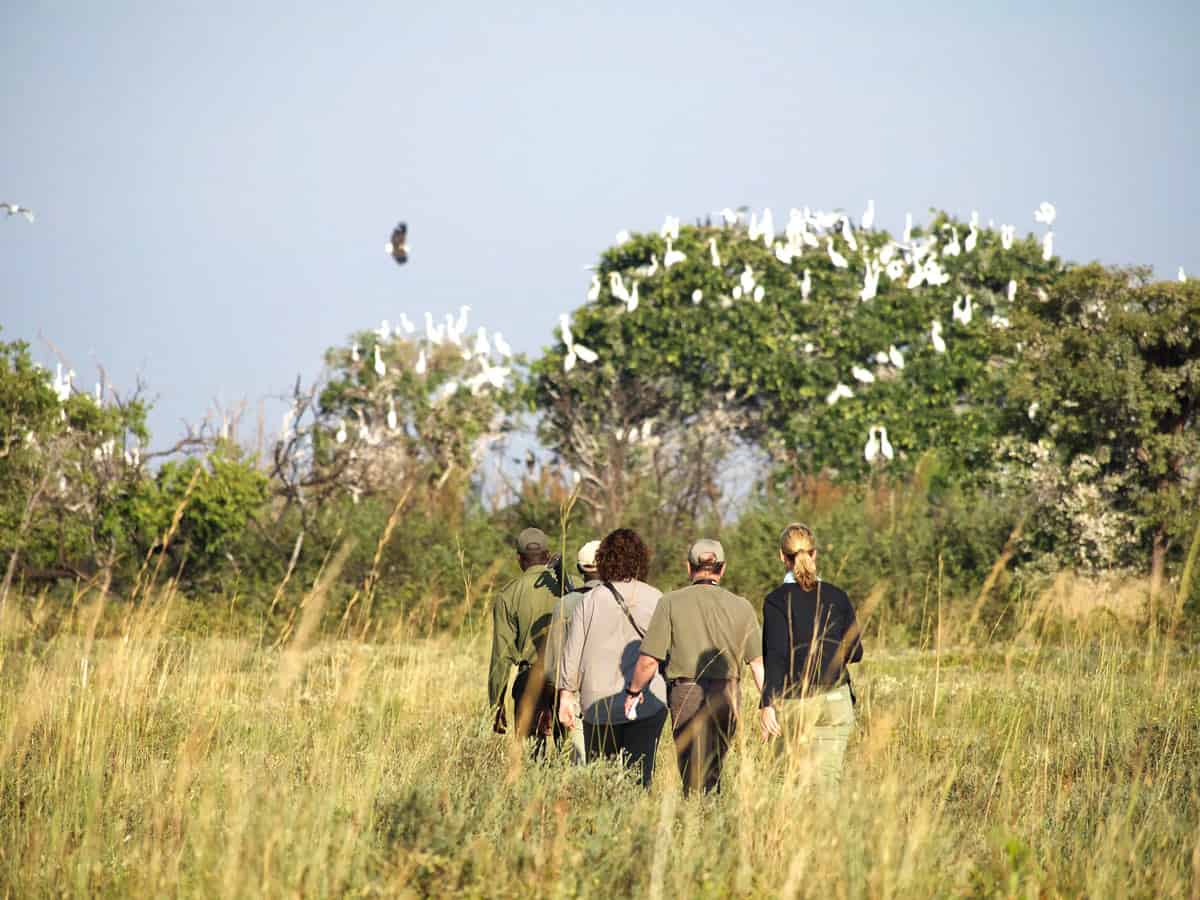 Norman Carr Safaris' guests walk in single file on walking safaris in Zambia.