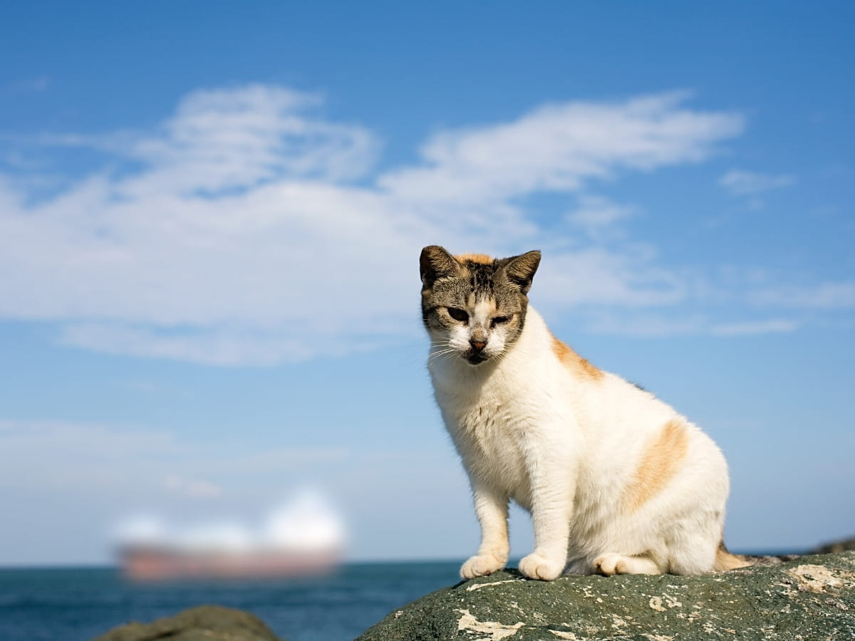 There are lots of wild cats outside El Morro in Old San Juan!