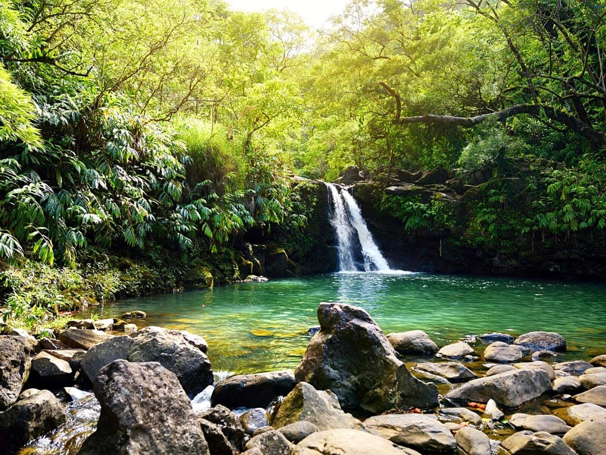 Looking for a lovely swimming hole? Check out the Lower Waikamoi Falls, Maui!