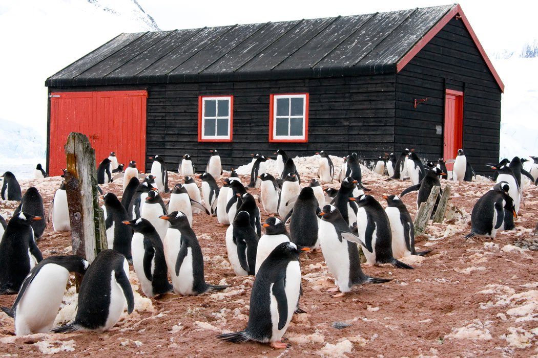 A colony of Gentoo penguins inhabits Port Lockroy (where there's even a post office!)