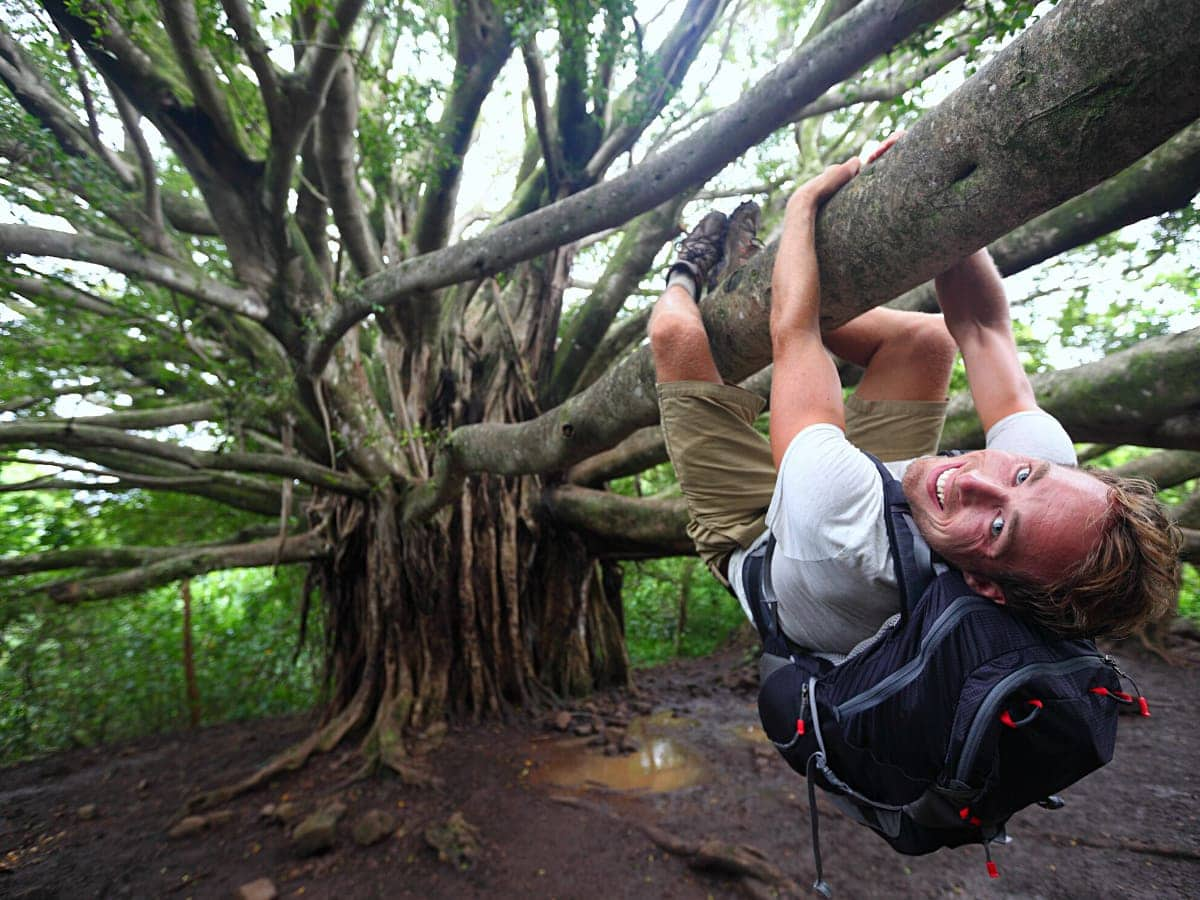 Hanging out under the big banyan tree on the Pipiwai Trail, Maui