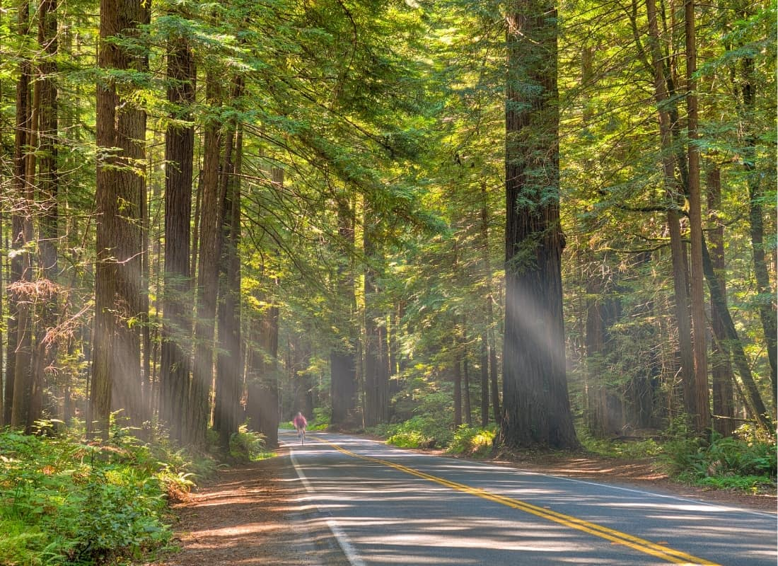 Along with the Big Sur, the famous Avenue of the Giants is one of the most scenic stretches of highway in Northern California.